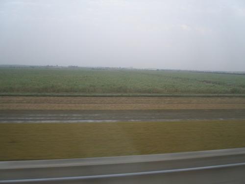 写真25 高鉄の車窓から、台湾の田畑3
